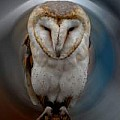 Eagle  Falcos Owl and Raven Photography and Paints  - Art Group